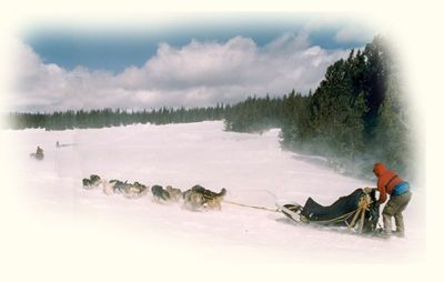 dog sledding, dogsled adventure, adventures, northwest Montana